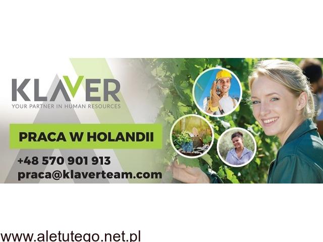 Sortowanie owoców i warzyw bez doświadczenia w Holandii !!!